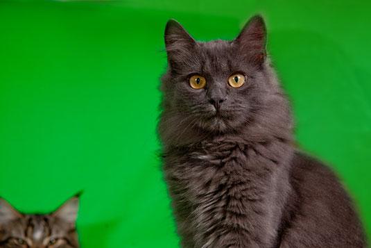 котик подобрашка по кличке Голубец