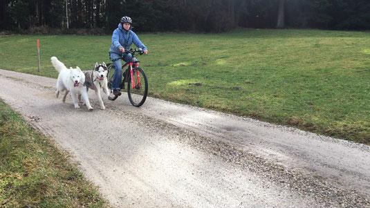 Blizzi, Yukon und Claudia mit dem Fahrrad, für alle drei ein Megaspass.