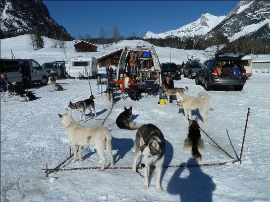Schlittenhunderennen Kandersteg 16./17. Februar 2013