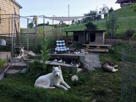 Abendliche Siesta; in der einen Hütte liegt noch der 7. Huskypöstler drinn.