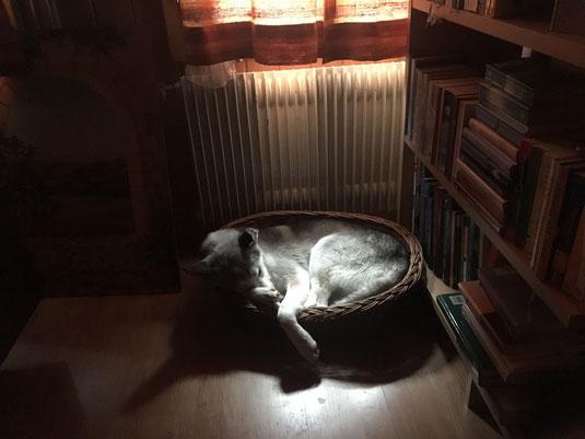 Unser süsses Zwergli am warmen Ofen. Langsam vergisst sie ganz, dass sie eigentlich ein Husky ist.