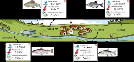 Résumé des caractéristiques et des espèces de poissons présentes dans l'animation. Cliquer sur l'image pour l'agrandir.
