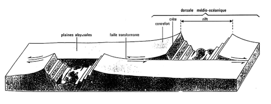 Principe de fonctionnement d'une faille transformante au niveau d'une dorsale.