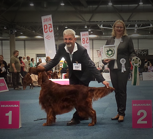 World Winner Leipzig 2017 Irish Setter Guardian Angel the Irish Spirit of Nature (Milow)