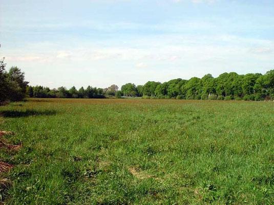 Blick über die Moorgrabenwiesen im Barrier Bruch.  Foto: NABU/Ulf Walek