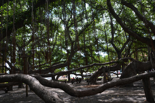 Banyan Tree Square
