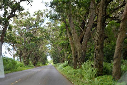 Maluhia Road