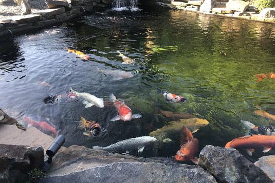 Koi Teich Heizung