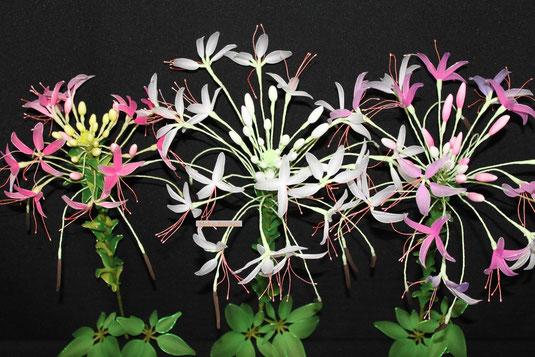 Fleur,flower détail