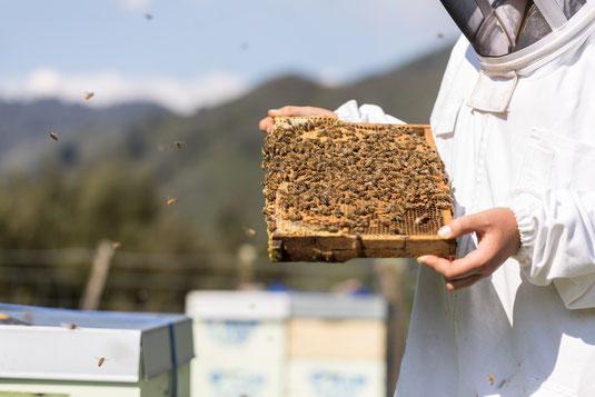 Inspection des cadres de ruche