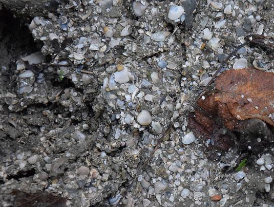 Detrito accumulato dalle argille franate.