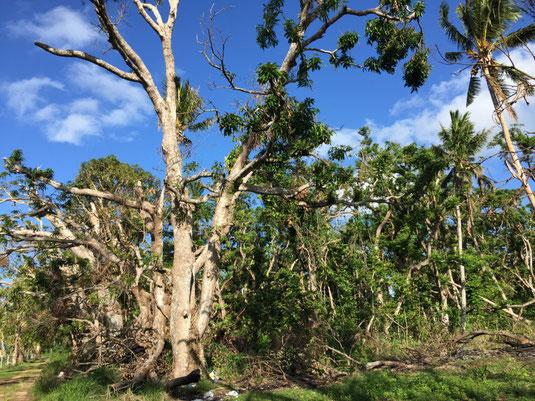 """""""Rain Forest"""" - nur noch eine winzige Fläche mit ursprünglichem Bewuchs"""