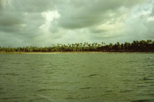 Atlantik, Überquerung, Segeltörn, Palmen, Küste, Strand, Reisebericht, Reiseblog, Atlantik, Überquerung, Segeltörn, von Senegal nach Brasilien,