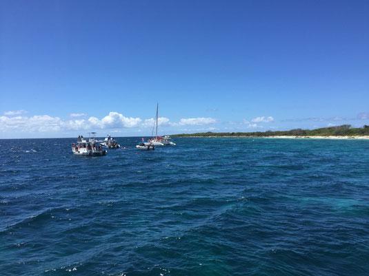 Isla Catalina, La Romana, RD, DR, Dom Rep, Dominikanische Republik, Schnorcheln, Korallen