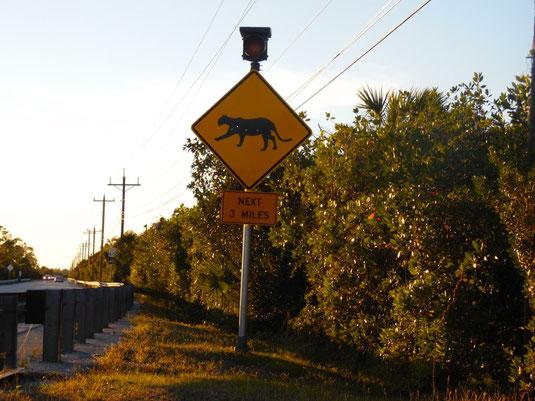 Florida, Everglades, Panther Schild, Gator Site
