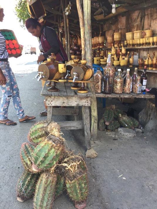 Kakteen in der Dom Rep Melocactus, Dom Rep, Dominikanische Republik, Lago Enriquillo, Azua
