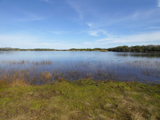 Florida, Everglades, Nine Mile Pond, See
