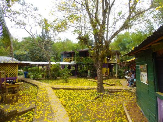 Mayfield Wasserfälle, Jamaika, Jamaica, Negril