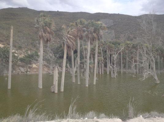 Dom Rep, Dominikanische Republik, Lago Enriquillo, Haiti, Caribe Tours