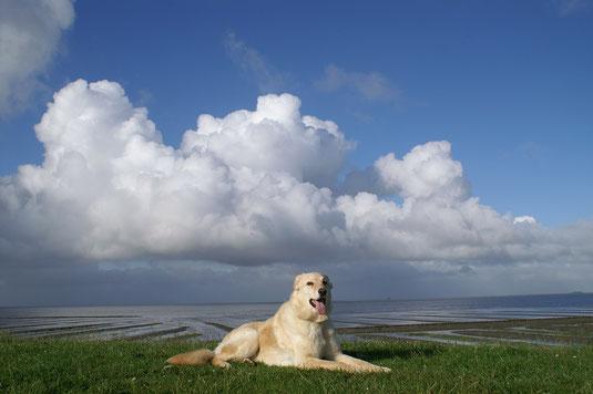 ein Hund auf dem Nordsee-Deich