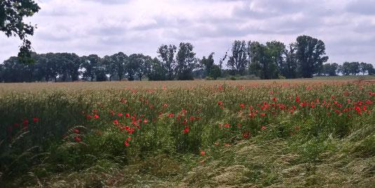 Blick auf die Felder Richtung Altlandsberg