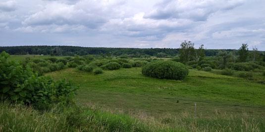 Blick auf das NSG Lange Dammwiesen