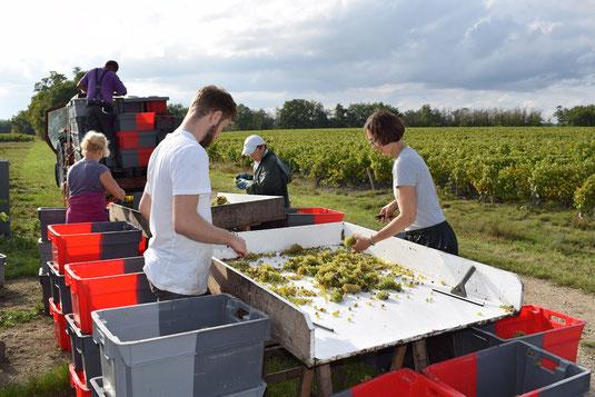 participate-hand-harvest-workshop-vineyard-Loire-Valley-Vouvray-Amboise-Tours-discover-winemaker-work-local-winery-Rendez-Vous-dans-les-Vignes