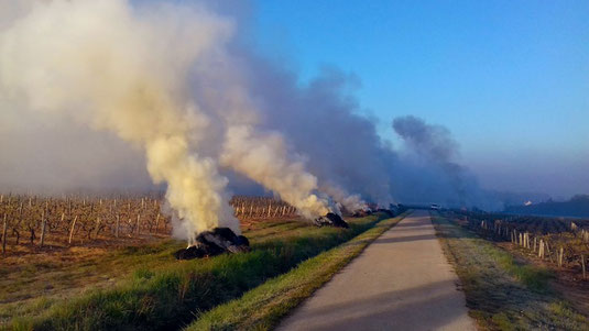 anti-frost-proctection-straw-fires-in-the-vineyard-Loire-Valley