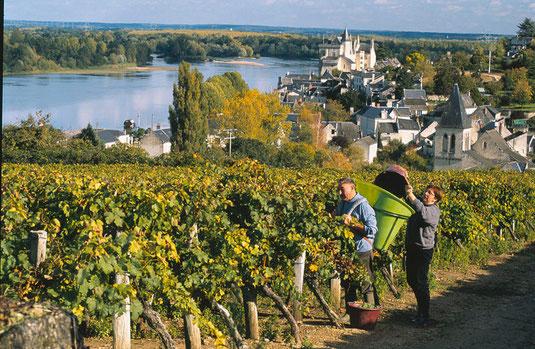 gite anjou loire vignobles vins de loire gennes