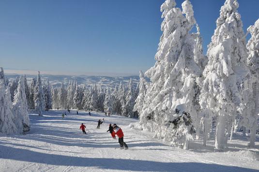 Perfekte Pisten und tief verschneite Bäume, @ Skigebiet Hochficht