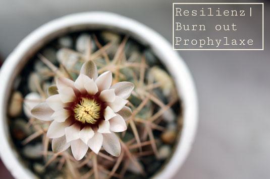 Bild Kaktus Prävention Resilienz