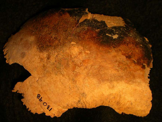 Right parietal from an adult cranium showing burn marks. Photo from Historic England.