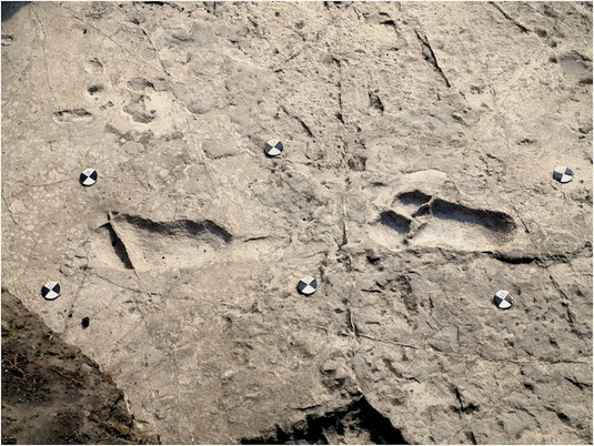 "Masao et al. ""Figure 9."" Original caption: ""Central part of the hominin trackway in test-pit M9. Tracks M9/S1-3 and M9/S1-2 are visible from left to right. The two tracks are crossed by some fractures filled by hard calcite veins, which were not removed."""