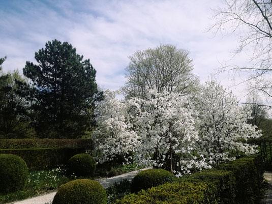 Baumblüte Britzer Garten - Berlin Neukölln