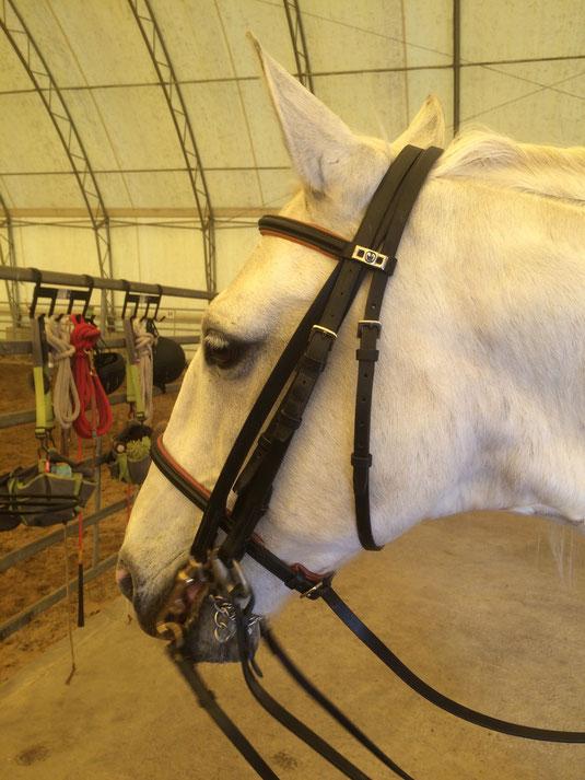 Kandare Unterlegtrense Horsemanship Klaudia Duif