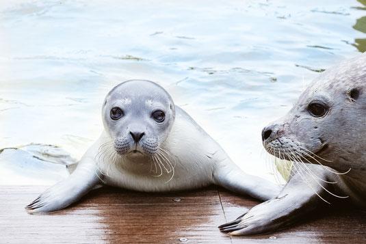 Tierschutz, Wildpark, Robben