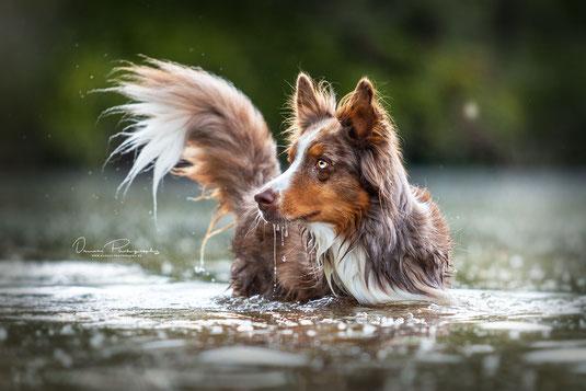 Fotoshooting junger Berner Sennenhund Welpe in der Wiese - Danees Photography - Hundefotografie in Bayern Würzburg Kitzingen Ochsenfurt Schweinfurt Werneck