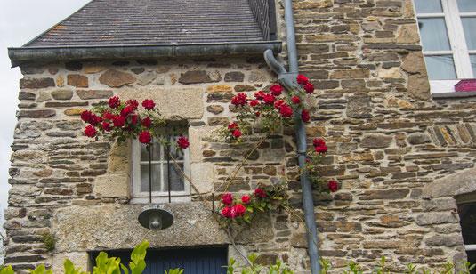 Rosen ranken um ein Granithaus in Barneville auf dem Cotentin