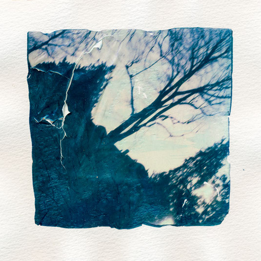 Polaroid Emulsion Lift abstract tree