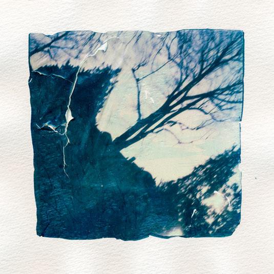 Polaroid Emulsion Lift abstract tree