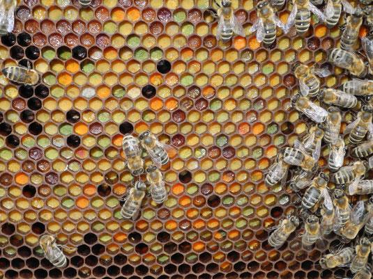 Bienenbrot Wabe