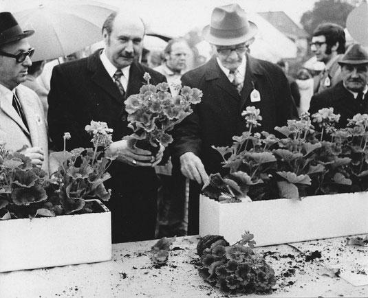 Großes Gedrünge herrschte beim Topfpflanzen des ersten Blumenkastens berim Geranienmarkt 1972 mit Elmar Sierp und Bürgermeister Willi Lantermann. Unterrubrik im Jahre 1972