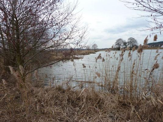 Die Biotopfläche Steingraben. (Foto: C. Beckstein)