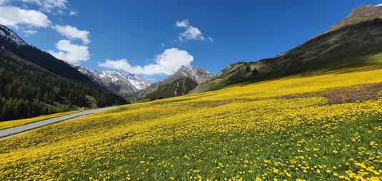 Frühlingswiesen in Laret mit dem Pit Ot im Hintergrund