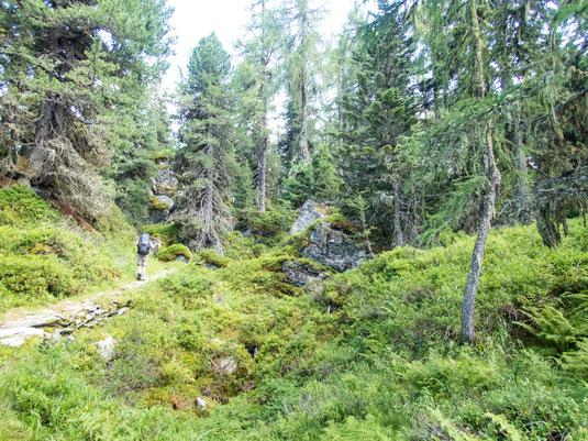 Der verwunschene Lärchenwald
