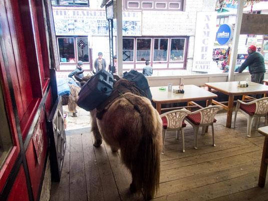 Das Yak verirrt sich auf der Restaurant Terrasse