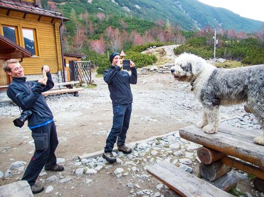 Da zückt jeder gerne seine Kamera, wenn ein Hund wie ein professionelles Model posiert.