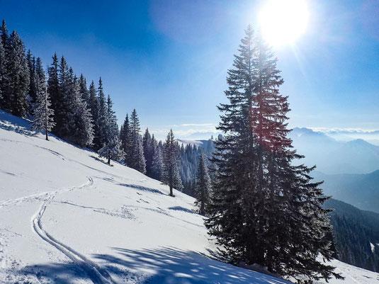Wunderschön, die mit leichtem Schnee bedeckten Nadelbäume