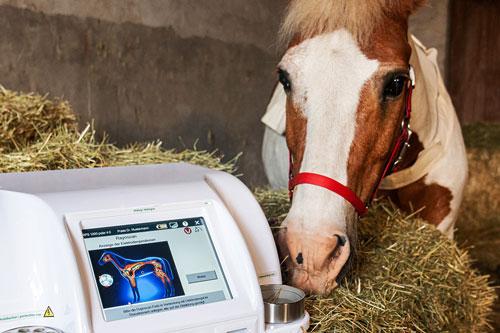 Bioresonanz Analyse und Therapie bei einem Pferd mit dem Scansystem des Rayocomp PS 1000 polar 4.0 VET. Behandelt werden Allergien, Stoffwechselstörungen, Erkrankungen der Haut, des Verdauungssystems, des Atmungssystems, des Bewegungsapparates.