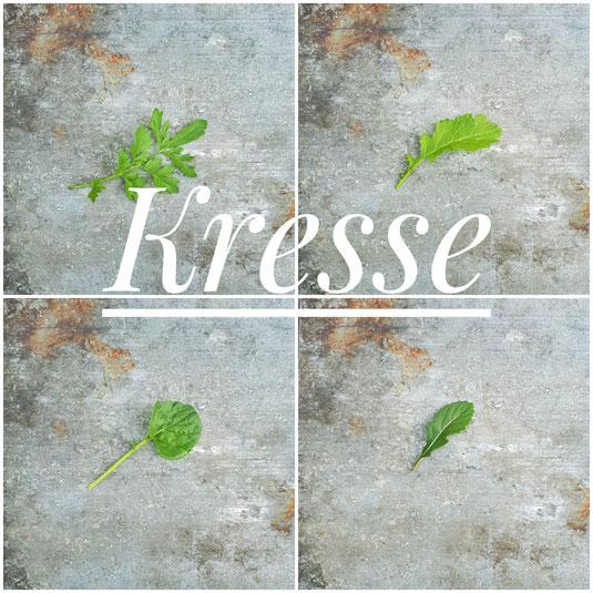 Peppergrass (Lepidium sativum), Barbarakresse (Barbarea vulgaris), Gartenkresse (Lepidium sativum) und Wasabi-Rauke (Diplotaxis erucoides)